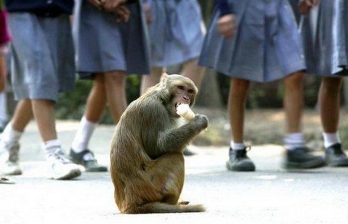 Национальный зоологический парк (Дели)