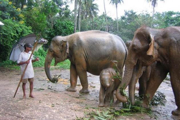 Едем на Новый год в Шри-Ланку